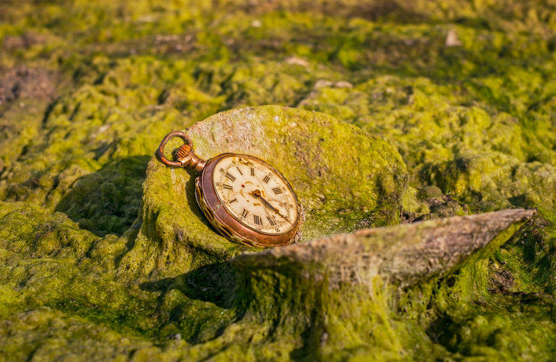 Close-up of pocket watch on moss