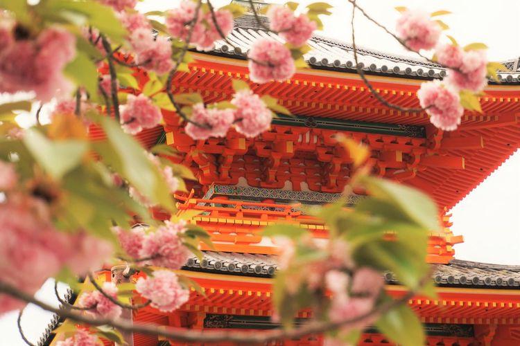 Close-up of cherry blossoms against deva gate at kiyomizu-dera temple