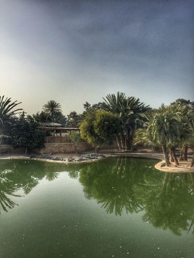 Crocodile farm .. ❤️ Djerba  Tunisia تونس جربة  Farm Zoo Crocodile Tree Palm Tree Reflection Water No People Tranquil Scene Sky Nature Waterfront Day Scenics Tranquility Outdoors Beauty In Nature