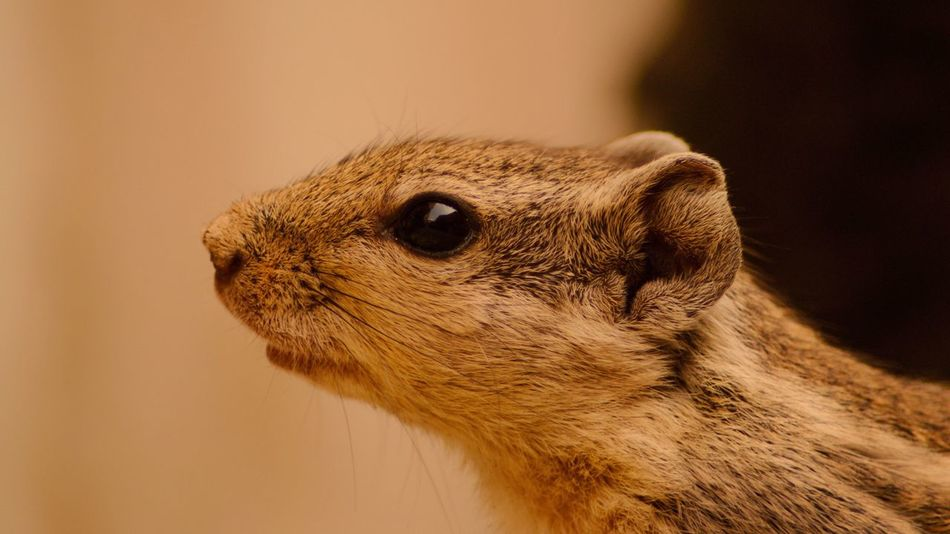 Squirrel Close-up Animals In The Wild Retouching Nikon D3200 Photooftheday Traveling Animallover Nikonphotographer Nikon_photography Places Outdoors Travelgram Closeup Eyeshot Vision Squirrel Closeup Squirrel Photo Squirellove