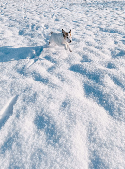 High angle view of dog in snow