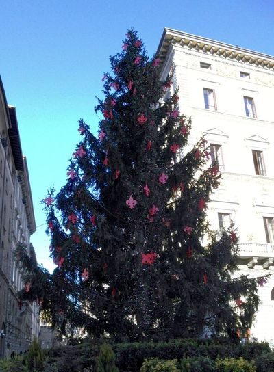 The Culture Of The Holidays Florence Beautifully Organised Christmas Around The World Christmas Tree Christmas Decoration Not Selected For Market Italy Firenze Florence Tree