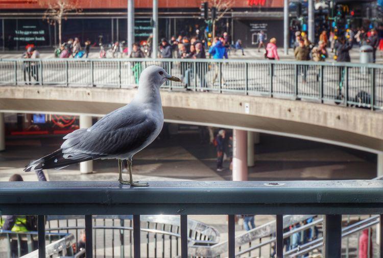 2019 Niklas Storm April Bird City Water Railing Architecture Close-up Building Exterior Built Structure Travel Sea Bird