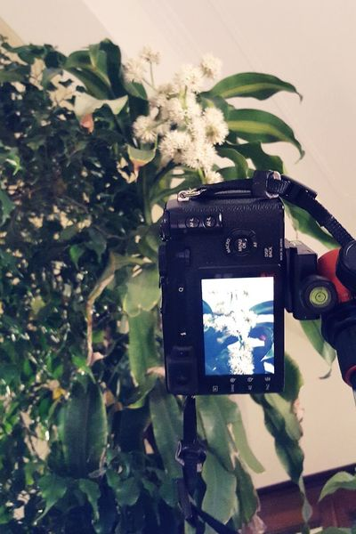 Enjoy The New Normal Plant Growth No People Technology Flower Indoors  Nature Taking Photos Taking Pictures Close-up Camera Camera - Photographic Equipment