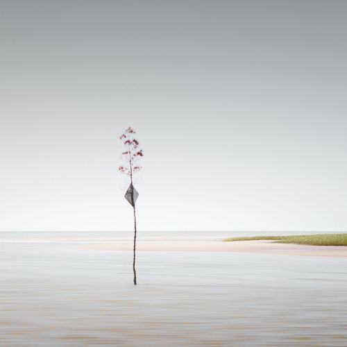 Plant in sea against clear sky