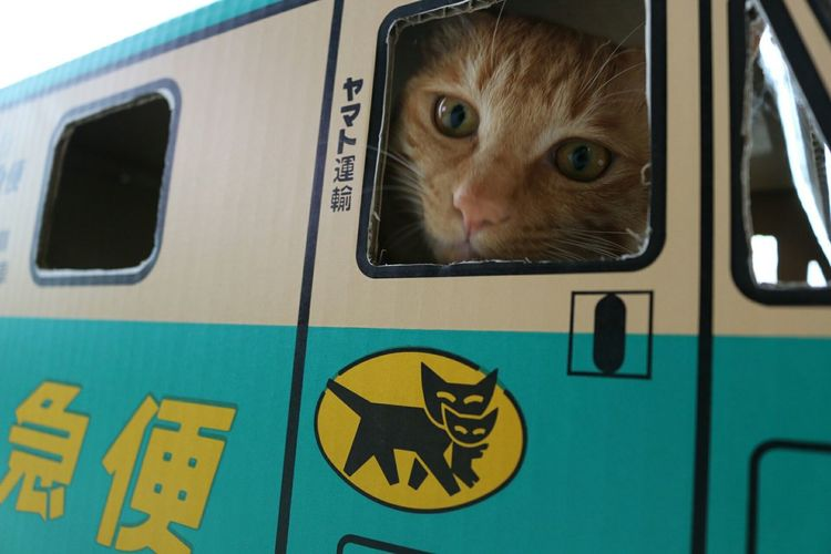 配達に行くよ~😺🐾 ねこあつめ ダンボールドライブ 猫の宅急便