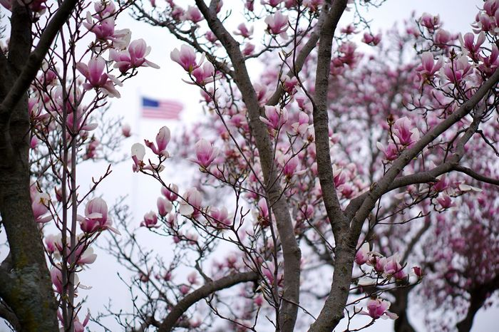 The colors of spring. Sony A6000 Sony Imaging Magnolia Tree Magnolia American Flag