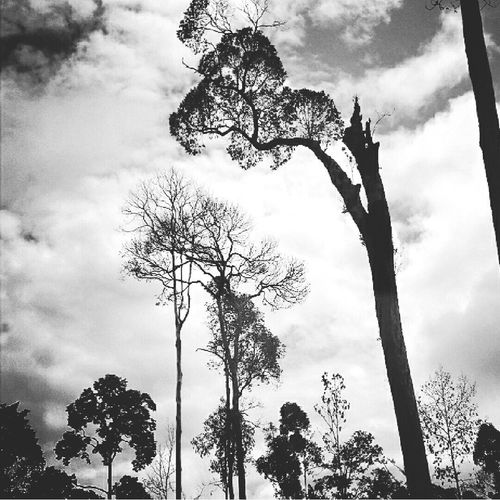 Borneo Forest Black And White Photos Around You This Is Indonesia Hutan Hutan Mati Blackandwhite Photography
