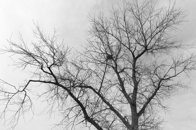 Abandoned nest in a tree, Nieuwkerkse kreek, Scherpbier EyeEm Market © Bare Tree Branch Low Angle View Scenics - Nature Tranquility Abandoned Nest Sony A77ii Zeeuws Vlaanderen Zeeland  The Netherlands Black And White