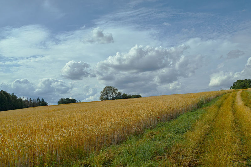 Cloud - Sky Field Sky Landscape Land Plant Agriculture Tranquil Scene Environment Rural Scene Tranquility Scenics - Nature Beauty In Nature Growth Crop  Nature No People Farm Day Cereal Plant Outdoors Plantation Weg Im Feld
