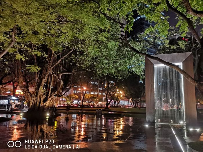 An old and grateful tree within the city. HUAWEI Photo Award: After Dark Tree Water Swimming Pool Illuminated Reflection Sky Architecture