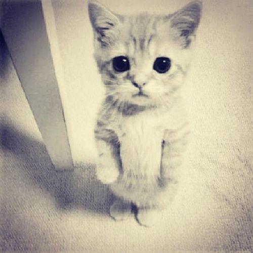 Лучшее лекарство от депрессии-кот Котик милый лапочка
