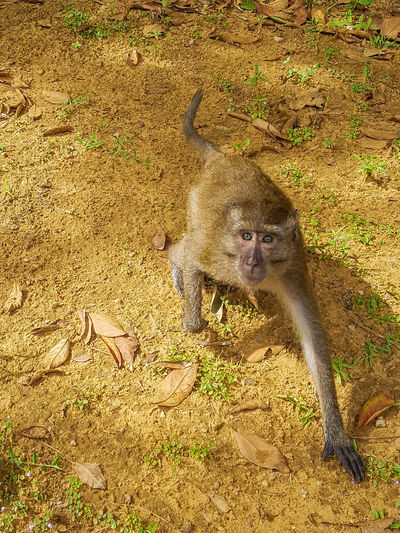 One Animal Animals In The Wild Travelphotography Travel The World Travel Photography Animal In Nature Monkey Affe