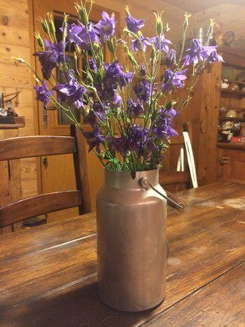 Bouquet ancolies