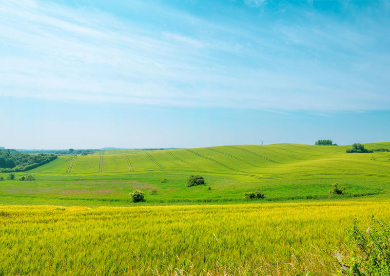 Agriculture Cloudy Copy Space Field Grass Green Color Growth Nature Panoramic Tranquility Beauty In Nature Blue Sky Cloud - Sky Day Hill Idyllic Land Over Horizon Landscape Lawn Meadow Non-urban Scene Outdoors Relaxation Scenics - Nature Springtime