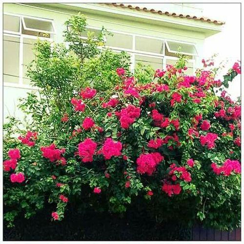"""""""Não há lugar como o lar"""" Home Sweet Home Lovemyhome Casaverde Loveflowers Greenhouse . Green"""