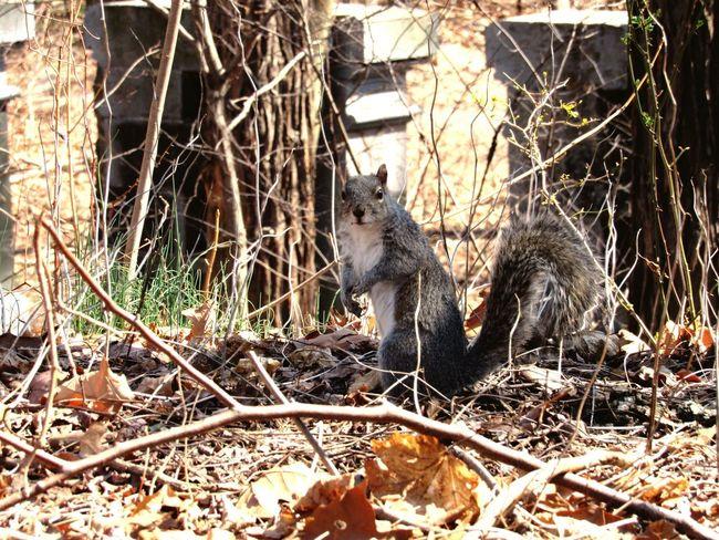 Squirrel Nature Van Cortlandt Park Fall