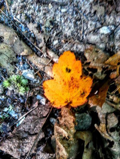 Extreme Edit Fall Colors Fall 2015 Walking Around Hiking North Carolina Hiking Trail