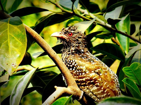 can you recognize this bird?Birds Nature Photography Bird Amazing Birds  Nature_collection Click Outdoors Colorful Beautiful Cool Best On EyeEm EyeEm Best Shots Weird Which Braids???? Best  Colorfull Bestoftheday 2016 Best Of EyeEm Photos Around You New On Eyeem Outing Photo Hot
