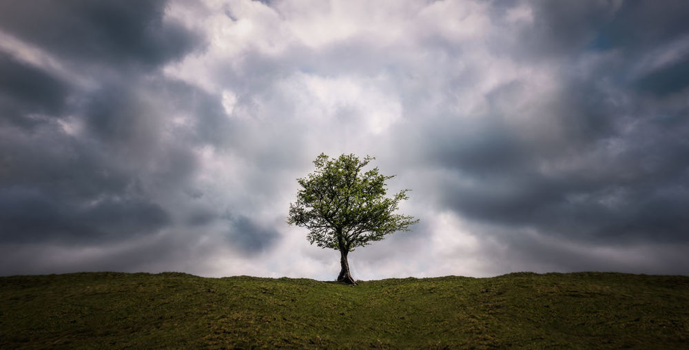 Lone Tree Hill Cloudy Simple Simplicity Tree Storm Cloud Innovation Shadow Dramatic Sky Single Tree Idyllic Sky Close-up Grass Atmospheric Mood Overcast Treetop Cumulus Cloud Cloudscape Heaven Tree Area