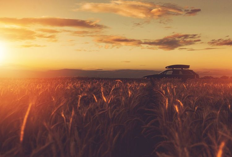 Countryside Sunset Scenery. Car Driving and Traveling Concept. Agriculture Beauty In Nature Car Cereal Plant Crop  Day Farm Field Grass Growth Landscape Nature No People Outdoors Plant Rural Scene Scenics Silhouette Sky Sunset Tranquil Scene Tranquility Traveling Vehicle Wheat