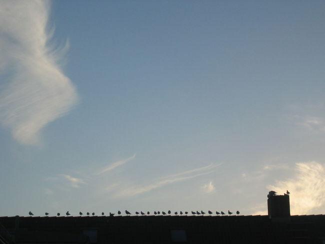 Aerial View Cloud Cloud - Sky Horizon Over Land Outdoors Scenics Silhouette Sky