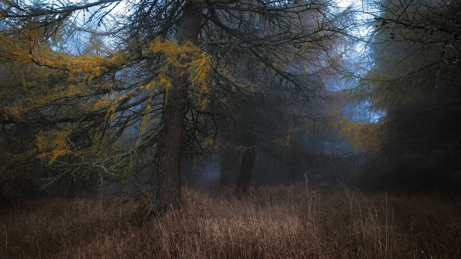 Autumn Mystic Art Autumn Beauty In Nature Day Fall Fog Forest Grass Growth Landscape Moody Nature No People Outdoors Scenics Tranquil Scene Tranquility Tree Tree Trunk