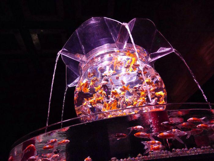 Artaquarium