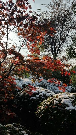 Autumn Snow