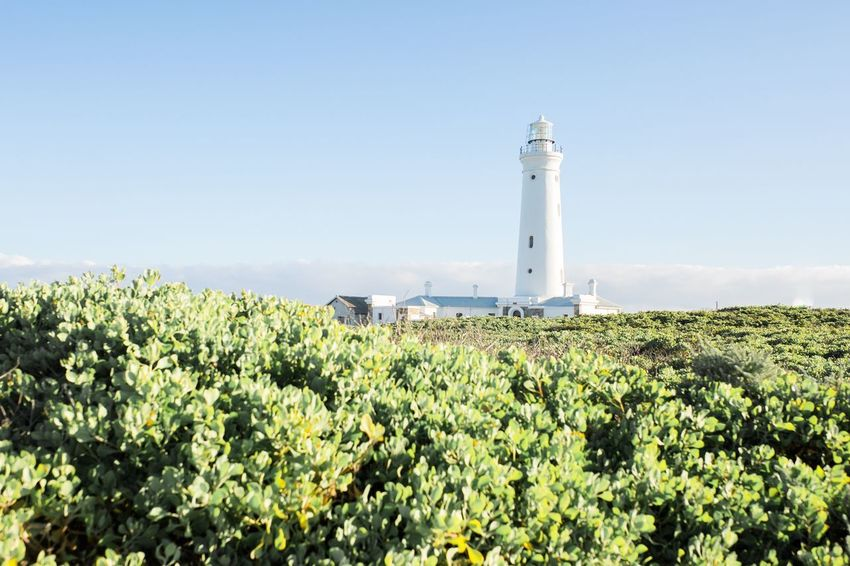 EyeEmNewHere Light And Airy Lighthouse Direction Growth Guidance Architecture Tower Plant Outdoors Landscape Beauty In Nature Built Structure Nature Field