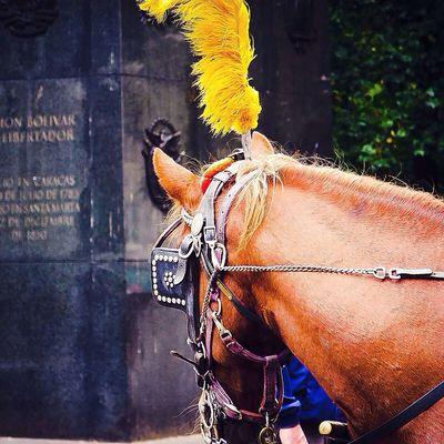 Horse Newyork Manhattan Colors