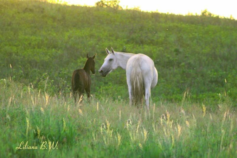 Animal Animals In The Wild Nature Young Animal Mammal No People Outdoors Horses Cavalos Haraskitanda Cheval Pferd Mangalargamachador Abccmm