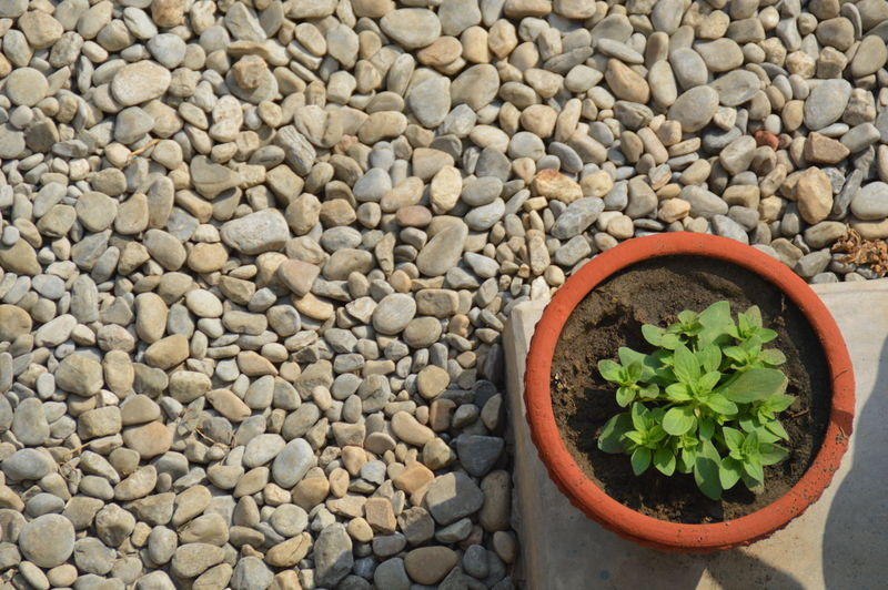 Plant On A Pot Pebbles And Stones Textures And Surfaces Minimalism Large Group Of Objects Close-up Purist In Photography Purist No Edit No Filter Lines And Shadows Lines And Curves Light And Shadow Lines And Corners Circle