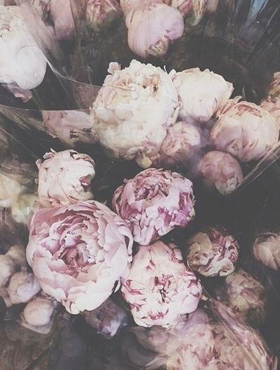 Peonies Flower_perfection Flowers