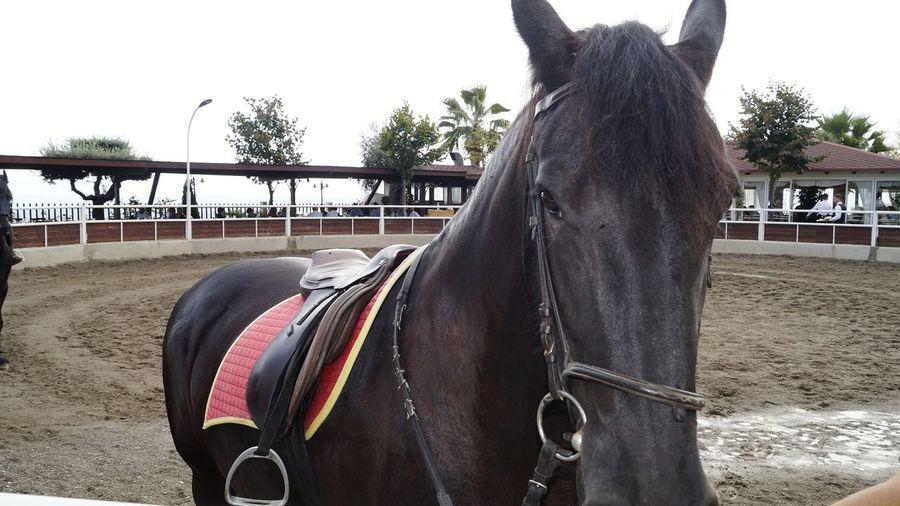 Horse Black Horse Horse Riding Horse Photography