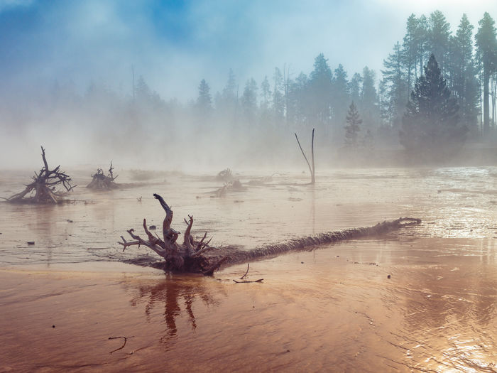 "44°32'58"" N 110°48'22"" W Beauty In Nature Fountain Paint Pot Area Landscape Morning Mist National Park No People Non-urban Scene Outdoors Scenics Tranquility Travel Destinations Tree Water Wyoming Yellowstone National Park The Great Outdoors - 2016 EyeEm Awards Fine Art Photography"