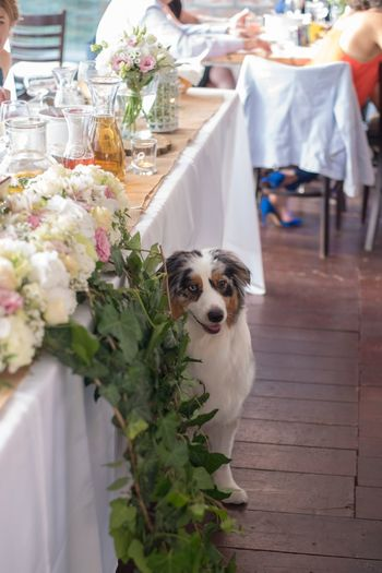 Portrait of dog by white flowers on table