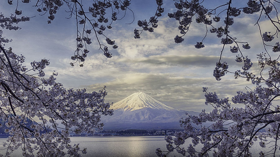 Beauty In Nature Branch Cloud - Sky Day Lake Landscape Mountain Mountain Range Nature No People Outdoors Scenics Sky Snow Snowcapped Mountain Tranquil Scene Tranquility Tree Water Winter