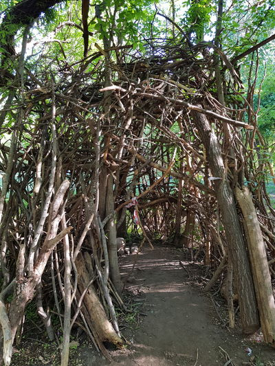 refugio Reparo Choza Refugio Tree Branch Forest Bamboo - Plant Tree Trunk Bamboo Grove Woods Countryside Country House
