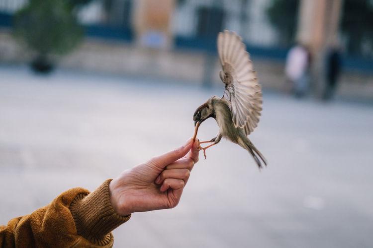 Cropped hand feeding bird