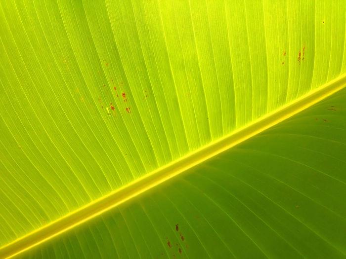 Full frame shot of banana green leaf