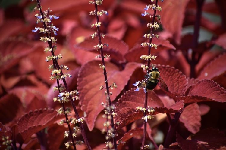 Close-up of honey bee on flowering plant