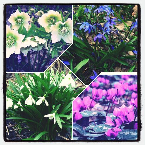 Весение цветы цветы весна цветы🌸🌼🌻💐🌾🌿