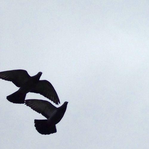 Grey sky over Bergen. IPSNoFilter Nature Norway Doves