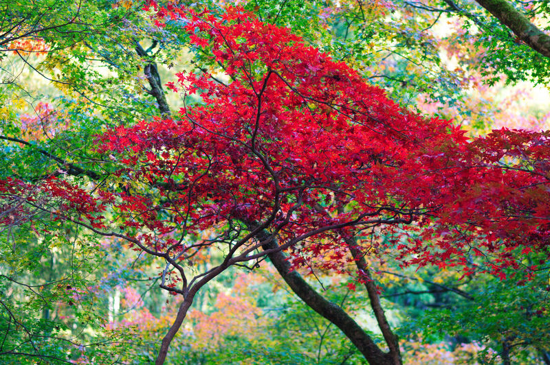 Low angle view of flowering trees in park during autumn
