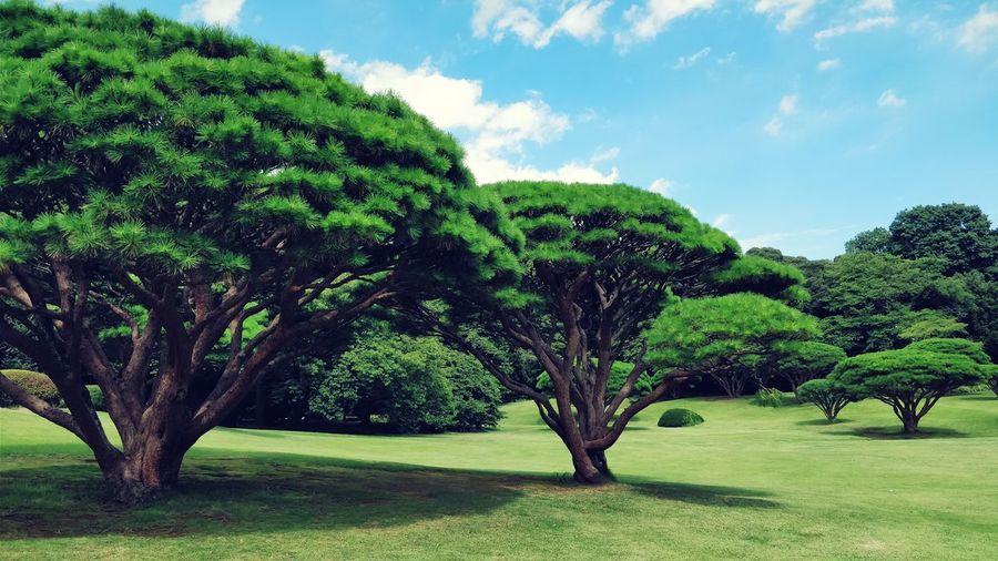 新宿御苑 东京 日本 新宿御苑 Tree Green Color Nature Cloud - Sky Beauty In Nature Sky Grass