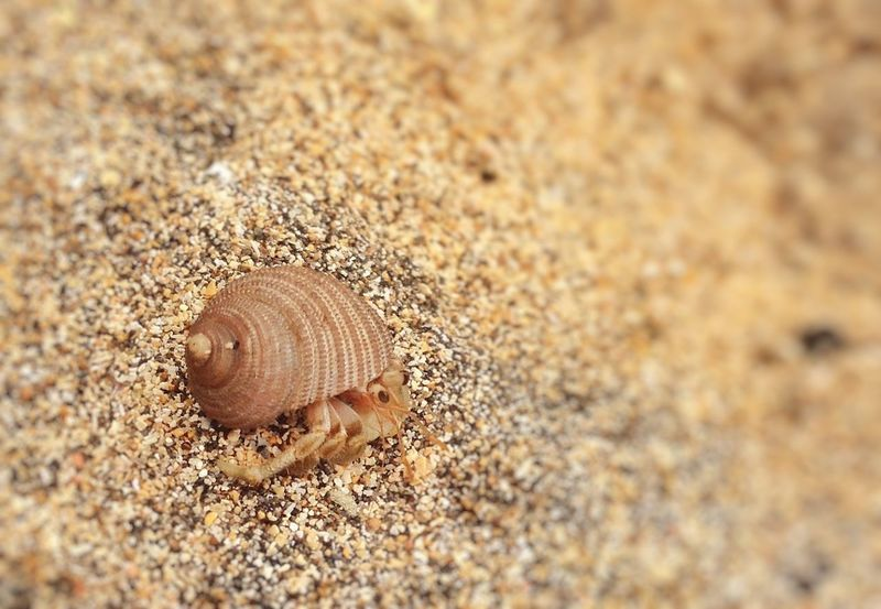 Animal Themes Fragility Nature Animals In The Wild Shell Close-up One Animal Outdoors Day No People Hermitcrab