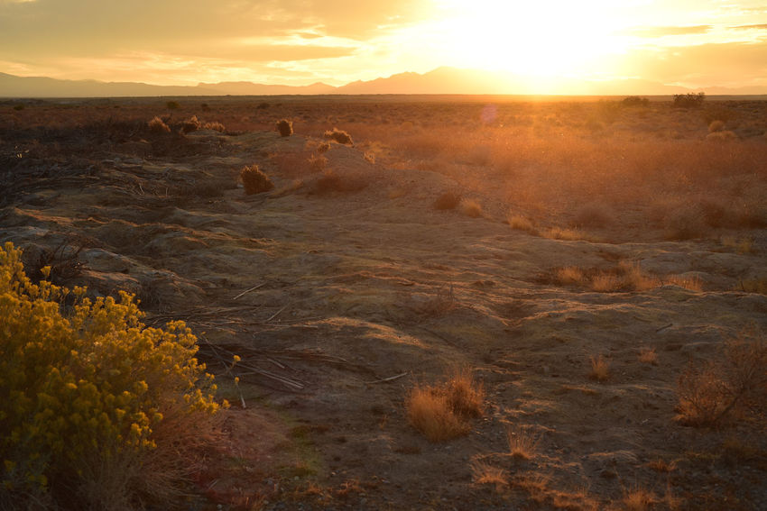 Mojave desert sunrise with yellow wild flowers in Pahrump, Nevada, USA Beauty In Nature Day Desert Landscape Desert Landscapes Desert Sunrise Horizon Over Land Landscape Nature No People Outdoors Scenics Sky Sun Sunrise Sunset Yellow Wildflower