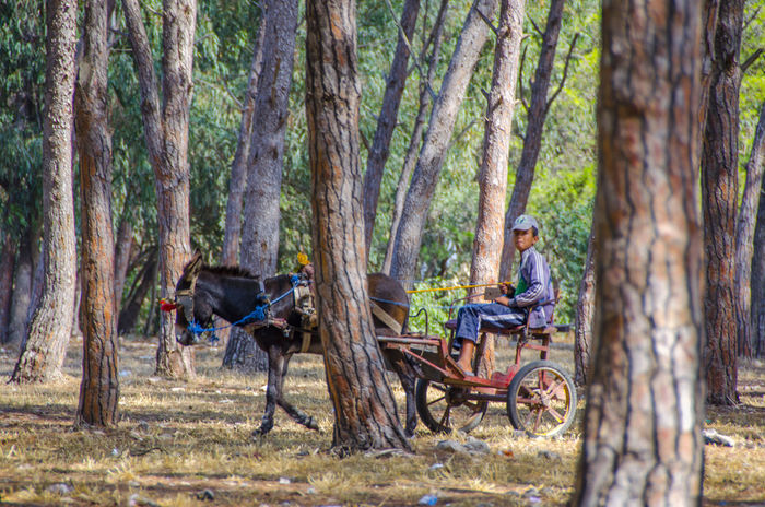 Bouskoura Natural Morroco Forest Trees Forest Trees Forest Photography Charette Donkey