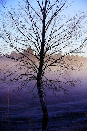 Sunrise Foggy Morning Misty Morning Tree Branch Galaxy Bare Tree Sky Scenics Single Tree